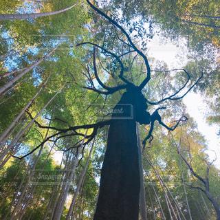 木々の写真・画像素材[1014622]