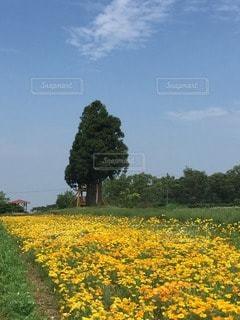 No.33428 お花畑