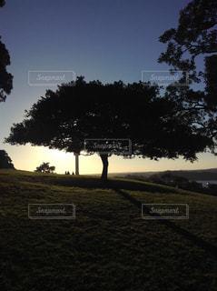 夕日とツリーの写真・画像素材[1061866]