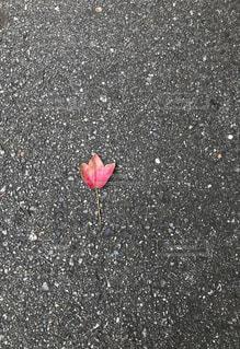 葉っぱのフレディの写真・画像素材[1048328]