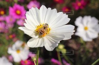 自然の写真・画像素材[1569562]