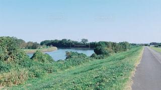道の端に木と水体の写真・画像素材[1016115]
