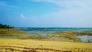 砂浜の上を歩く羊の群れの写真・画像素材[1016273]