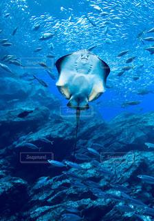 水面下を泳ぐエイと魚たち - No.1016471