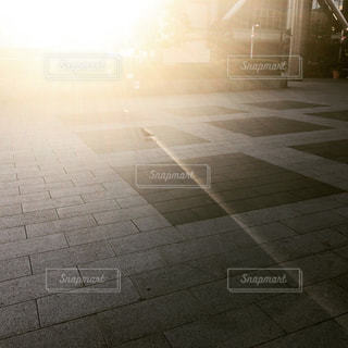 鳩と太陽の写真・画像素材[1016937]