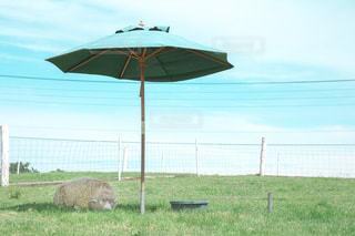 羊の避暑地の写真・画像素材[1069035]