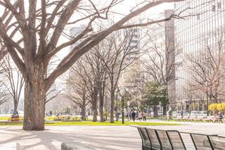 公園のベンチの写真・画像素材[1069069]
