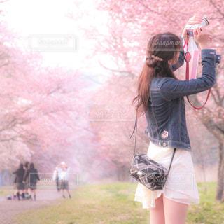 桜を撮る女性の写真・画像素材[1069734]