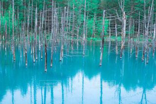 青い池の写真・画像素材[1069735]