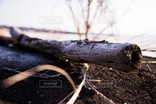 流木の写真・画像素材[1087674]