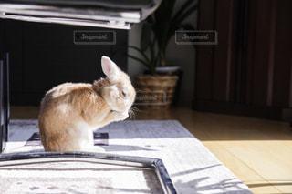 ウサギの写真・画像素材[1147619]