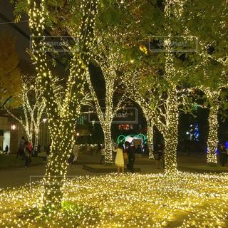 木の隣に座っているトラフィック ライトの写真・画像素材[1017247]