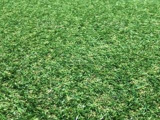 奥行き人工芝の写真・画像素材[1017262]