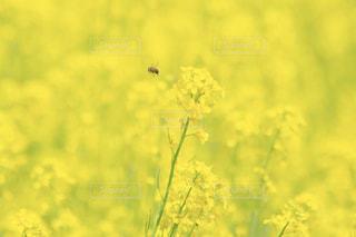 近くのお花畑の写真・画像素材[1181265]