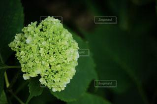 近くの緑の植物をの写真・画像素材[1181273]