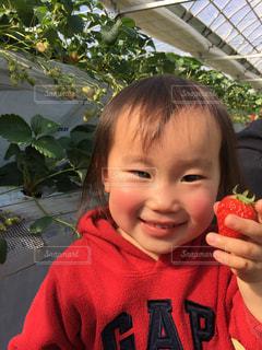 初めてのイチゴ狩りの写真・画像素材[1027213]