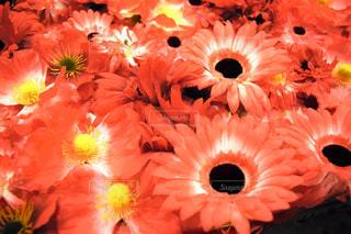 赤い花 - No.1017992