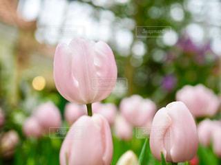 春だよ - No.1022446