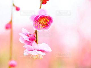 春の訪れの写真・画像素材[1032860]