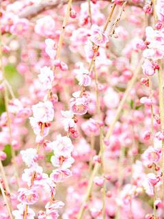 春の訪れ - No.1033088
