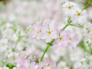 春を喜ぶの写真・画像素材[1040239]