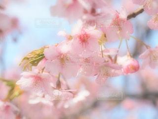 春爛漫 - No.1051116