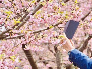 春を撮るの写真・画像素材[1051119]