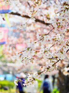 春が来た🌸 - No.1082903