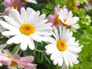 かわいい白 - No.1085595