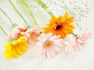 春色の花たちの写真・画像素材[1092467]