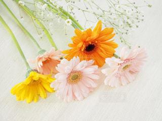 春色の花たち - No.1092473