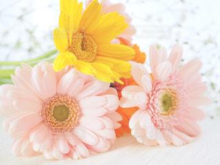 春色の花たち - No.1092480