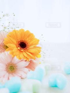 春を感じるの写真・画像素材[1092533]