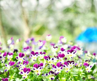 可愛らしい花たちの写真・画像素材[1098449]