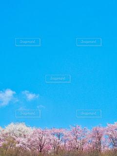 広い広い空と桜 - No.1099783