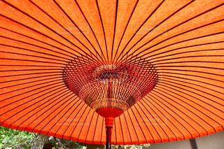 野天傘の写真・画像素材[1221520]