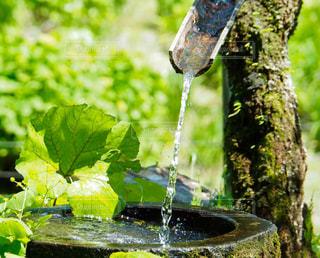 きれいな水の写真・画像素材[1353086]