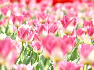 春爛漫の写真・画像素材[1844094]