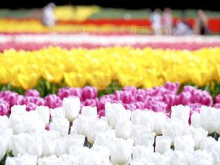 花畑の写真・画像素材[1844095]