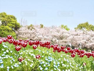 春の花勢揃いの写真・画像素材[1844097]