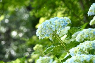 初夏を告げるの写真・画像素材[2174587]