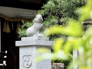 狛うさぎさんの写真・画像素材[2179727]
