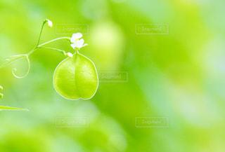 かわいいグリーンの写真・画像素材[2319956]