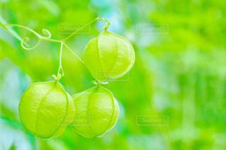 かわいいグリーンの写真・画像素材[2319957]