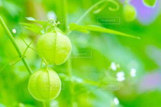 かわいいグリーンの写真・画像素材[2319958]