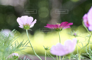 鮮やかな秋の写真・画像素材[2485396]