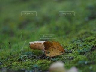 落ち葉の写真・画像素材[2601824]