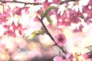 ピンクに染まるの写真・画像素材[2958860]