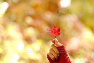 秋の一日の写真・画像素材[3887413]