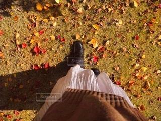 秋散歩の写真・画像素材[3923148]